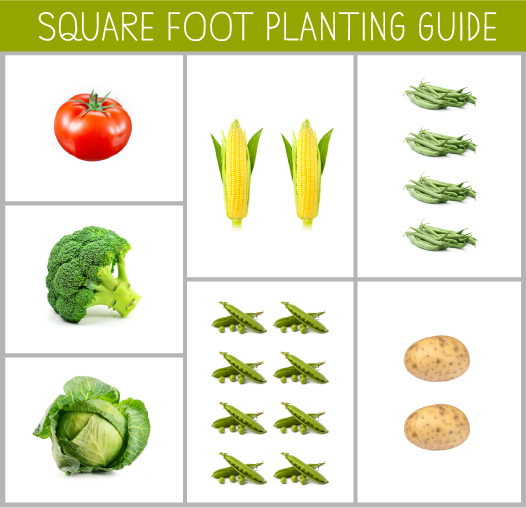 Let Your Garden Grow: An Early June Planting Guide - Remember to adequately space out your crops, planting only a handful of seeds for each square foot. The table above lists the minimum planting distance for each crop.