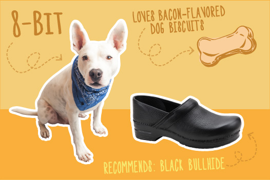 Dogs & Clogs: Recommendations from the Experts  -
