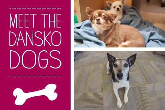 Meet_the_Dansko_Dogs1.jpg -